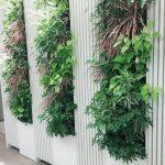 オフィスで評判の壁面緑化をご自宅で。植物のパワーで癒し空間を。