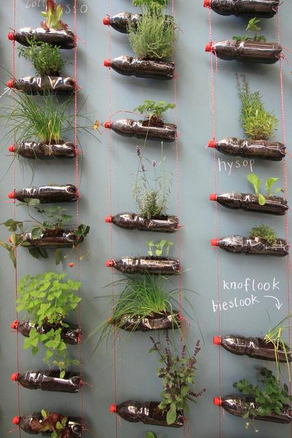 ペットボトルの植木鉢