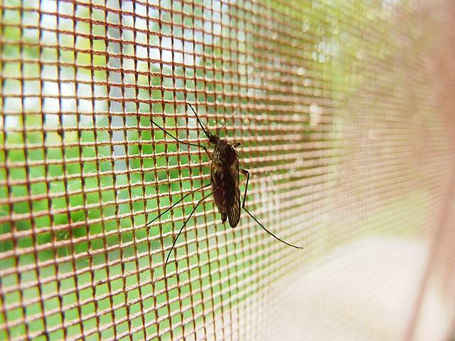 蚊の侵入を防ぐには網戸の閉めかたにポイントあり。アロマと合わせて撃退!