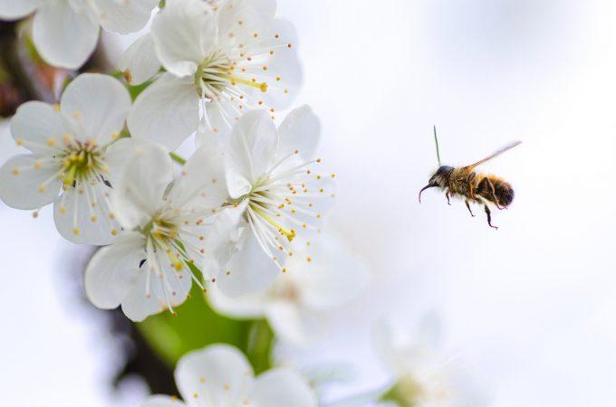 花に近づく蜂