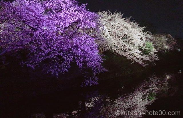 舞鶴公園桜ライトアップ