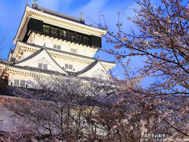勝山公園の桜