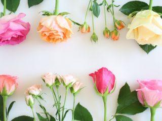 flower_basic