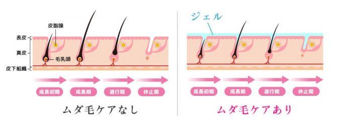 毛のサイクル